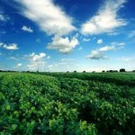 Argentine agricultural sector importance for the world economy