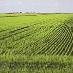 Saudi dairy giant Almarai buys Argentina farm operator to increase supplies