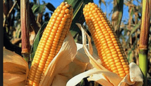 Why and How to invest in South American Agriculture ?