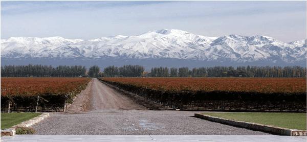 mendoza-vineyard