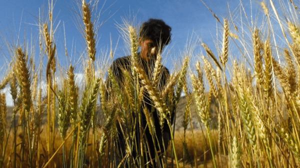 Precios de la tierra agrícola actualizados 2016